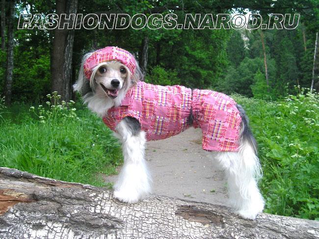 Одежда для китайской хохлатой собаки видео